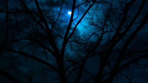 beautiful-dark-scenery-moon-in-forest